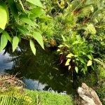 Photo of Phuket Botanic Garden