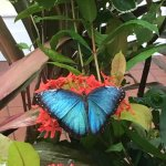 Photo de Key West Butterfly and Nature Conservatory