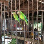 Pair of parrots in the restaurant