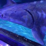 Foto de Aquarium of the Bay