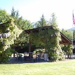 Picnic shelters at our cabins with Wisteria in bloom