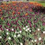 Foto de Planty Park