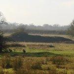 Bunnies (large ones) on the heath.