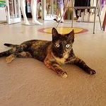 village cat :)