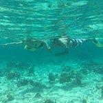 Snorkeling along Belize Barrier Reef