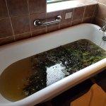 Photo of Voya Seaweed Baths
