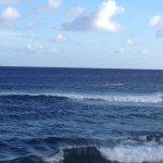 Photo de Kuhio Shores Condos