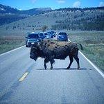 photos from 4-day Yellowstone / Grand Teton trip, May 2017