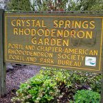 Photo from Crystal Springs Rhododendron Garden - April 2017