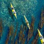 Guests kayaking over bull kelp off the west side of San Juan Island.