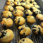 Made-from-scratch Blue Ribbon Blueberry Muffins at Wedgwood Inn, New Hope, Bucks County, Pa, USA