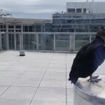 Club M Floor view --- rooftops and buzzards