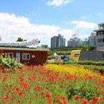 Flower gardens at Hangang park