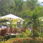 Tropical plants near pool