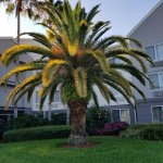 Fairfield Inn & Suites Fort Myers Cape Coral Image