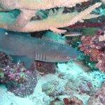 Mai Dive - Astrolabe Reef Resort Foto