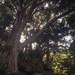 Old Cremorne Park