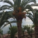 Foto van Hotel Molyvos 1