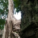 Photo de Ta Prohm