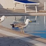 Photo of ELMA Park Hotel Terme & Centro Benessere