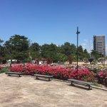 浜寺公園薔薇園