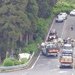 Cow traffic jam!