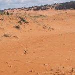Písečné duny s přízemním porostem