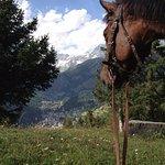Photo of Farm stay holiday La Pera Doussa