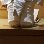 Towels in the shape of an elephant by room service staff, Rinkal Pal