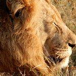 Kambaku Safari Lodge Φωτογραφία