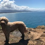 """Cape Lookout """"Cape"""" Trail views and the muddy pup!"""