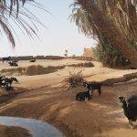 Une source dans le désert, des chèvres, un berger, quelque part à l'ombre