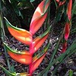 Beautiful flora along the path