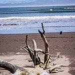 Bolinas Beach Foto