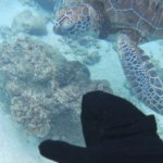 Aussies Snorkel on Great Barrier Reef - Ocean Spirit Cruises