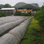 Organic farm near Daxu old town