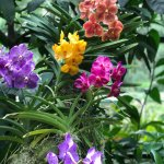 National Orchid Garden Foto