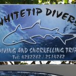 Whitetip Divers Foto
