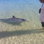 Dolphins by the beach ...