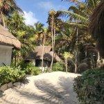 Playa Mambo Foto