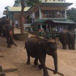 Elephants walking down to the bathing area