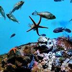 Photo de Kagoshima City Aquarium