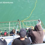 Photo de White Shark Diving Company