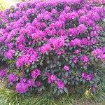 Rhododendronpark Bremen Foto