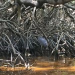Foto de Mangroves of Dzinitun