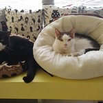 Photo of Bialy Kot (White Cat) Cat Cafe