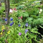 Streamside gardens, RHS Harlow Carr
