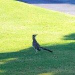 Foto de Cabo Real Golf Course