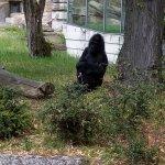 Photo de Zoologischer Garten (Berlin Zoo)