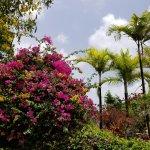 lush tropical flora